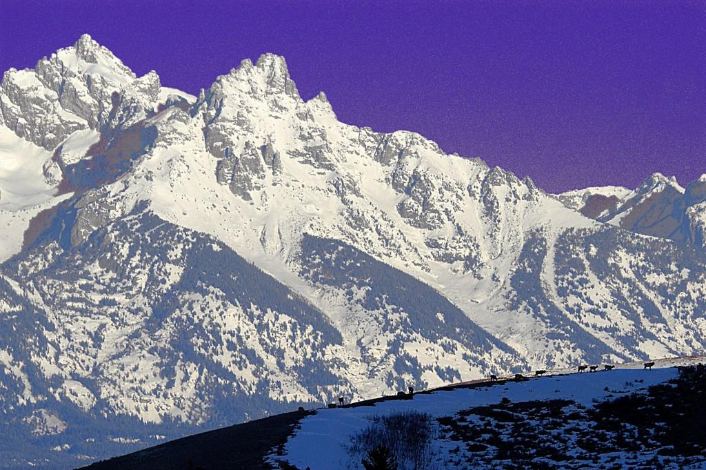 Teton Scenes-Wintering Elk