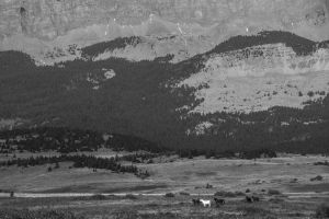 Pasture on The Rocky Mountain Front