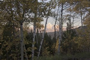 Tetons Scenes-Backdrop-1