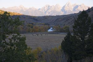 Tetons Scenes-Backdrop-2