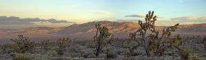 Mohave Perspective-3