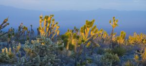 Mohave Sunrise-1