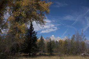 Tetons Scenes-Back in the Woods