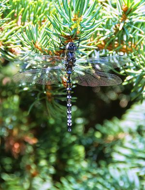 Jewels With Wings-c10.jpg