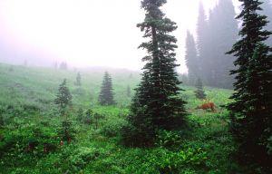 A Special Garden-Mt Rainier